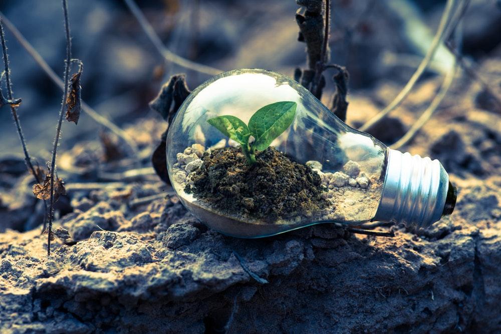 8 simple måder at redde miljøet på